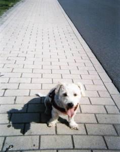 Esther Perdok - Hond